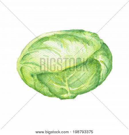 Cabbage watercolor illustration on white background. Raw green cabbage handdrawn image. Cabbage leaf vegetable isolated. Cabbage clipart. Traditional vegetable for salad or soup. Recipe or cook book