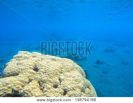 Coral seaworld in tropical seashore. Undersea landscape photo. Fauna and flora of tropical shore. Coral reef underwater photo. Snorkeling in tropics. Exotic island seaside vacation. Coral texture