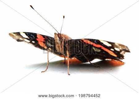 Emperor Butterfly Isolated