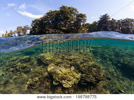 Double landscape with sea and sky. Seascape split photo. Tropical island greenery. Underwater coral reef. Above and below waterline seaview. Exotic seashore wild nature view. Shallow sea water lagoon