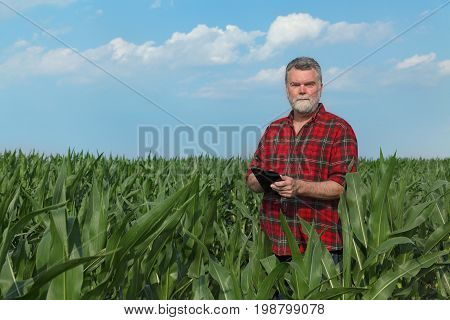 Agricultural Scene, Farmer In Green Corn Field