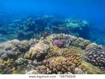 Underwater landscape with coral reef in sunlight. Oceanic biosphere. Tropical fishes in wild nature. Blue shallow sea water wildlife. Sea bottom with coral ecosystem. Tropical sea adventure snorkeling