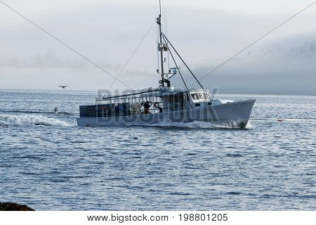 White lobster boat heads out to set traps with fogged in porcupine islands in the background. There are also seagulls flying around the boat.