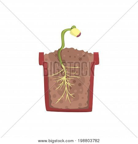 Plant growing from seed of a bean in a pot with ground soil, stage of growth, pot in a cross section vector Illustration on a white background