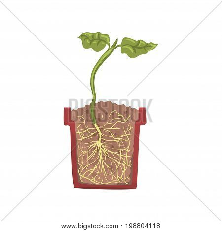 Green plant growing in a pot with ground soil, stage of growth, pot in a cross section vector Illustration on a white background