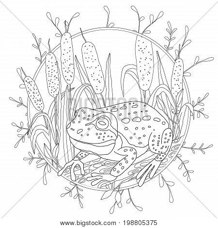 A stylized frog sits among the reeds. Sketch for adult anti-stress coloring.