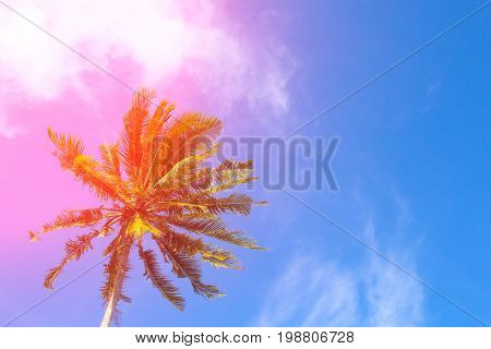 Hot pink flare on coco palm trees. Tropical landscape with palms. Palm tree crown on blue sky. Sunny tropical island toned photo. Sunshine on palm leaf. Blooming tropical nature. Exotic island travel
