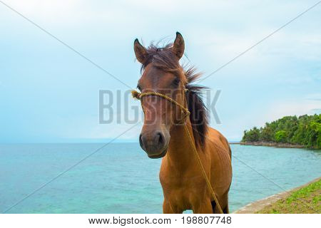 Horse and sea landscape. Travel photo. Brown horse head closeup. Lovely farm animal. Cute horse with blue seascape. Beautiful seashore view. Vacation adventure. Horseriding on beach banner template
