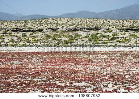 Flowering Desert In The Chilean Atacama