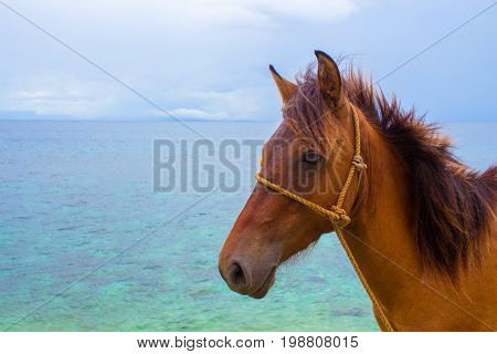 Horse and seaview. Travel photo. Brown horse head closeup. Lovely farm animal. Cute horse with blue seascape. Tropical seashore view. Vacation adventure horseriding on beach. Domestic farm animal