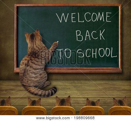 The cat teacher wrote on the blackboard