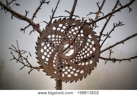 Circular disk hooked on a tree in the forest