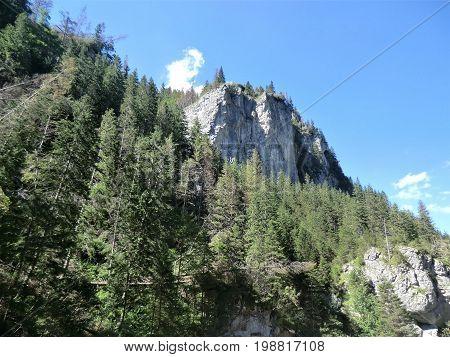 Craggy outcrop and pine trees in the Tatra Mountains near Zakopane, Poland