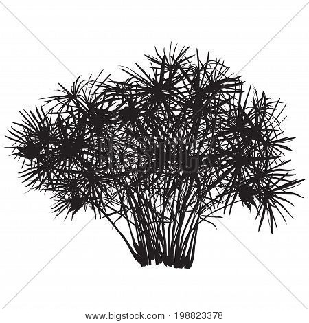 Papyrus bush silhouette the black-and-white vector image on a white background
