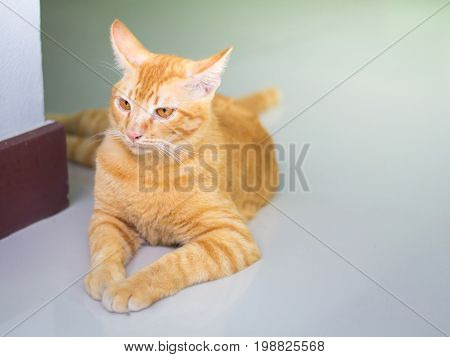 Abstract Siam cat sit on cement floor. Yellow cat sit on white floor.