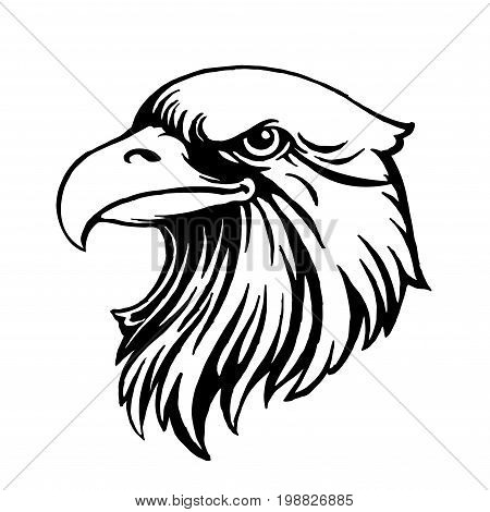 Eagle head logo Template, Hawk mascot graphic, Portrait of a bald eagle.Vector,eps8,eps10