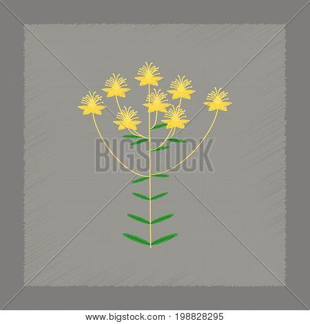 flat shading style icon of wild plant Hypericum
