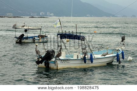 Puerto Vallarta, Mexico - December 20, 2013. Pelicans sitting on small fishing boats