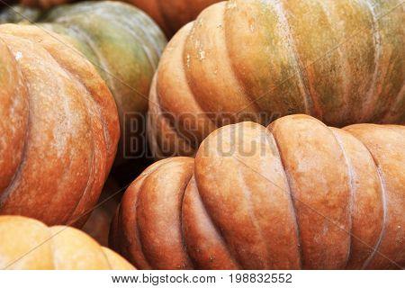Big pumpkins. Fair of a pumpkins in California