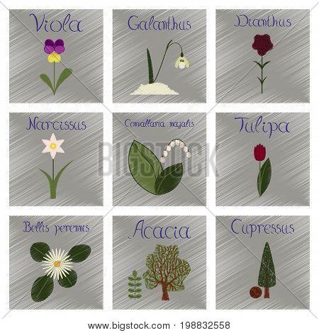 assembly flat shading style Illustrations of Cupressus Acacia Bellis Tulipa Convallaria Narcissus Dianthus Galanthus