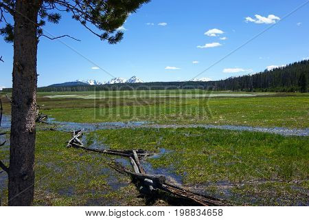Spring Runoff in a Sawtooth Mountain meadow, near Stanley, Idaho.