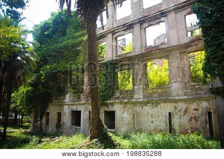 Wall of ruined building overgrown by ivy in Abkhazia