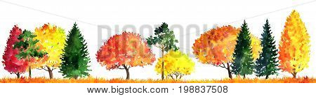 watercolor autumn landscape with deciduous trees, pines, firs and grass, abstract nature background, forest template, yellow and red foliage and plants, hand drawn illustration