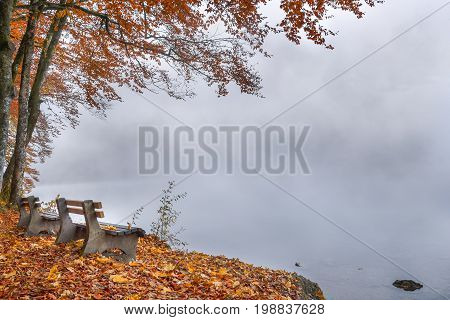 Benches on a foggy lake shore in autumn decor - Fall scenery with wooden benches on a misty lake shore and a colorful carpet of leaves in Bavaria Germany.