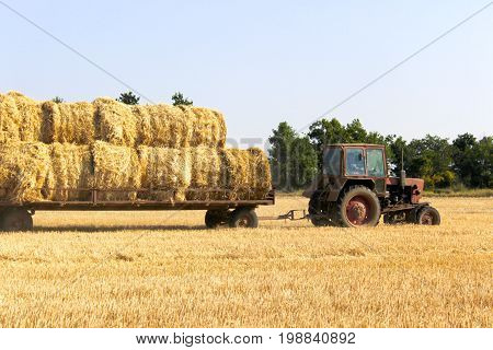 Tractor carrying hay bale rolls - stacking them on pile. Agricultural machine collecting bales of hay on a field
