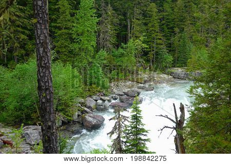 A river flowing through a green forest in Montana's Glacier National Park.