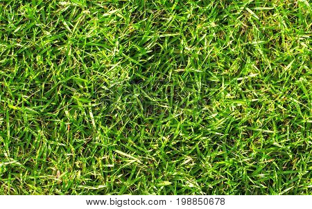 Natural green grass background. Green grass field photo background. Spring banner of fresh green grass. Grass image for backdrop or seasonal card. Summer land lawn. Playground area for summer sport