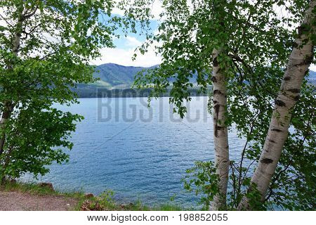 Trees Along the Shore of Montana's Lake McDonald in Glacier National Park.