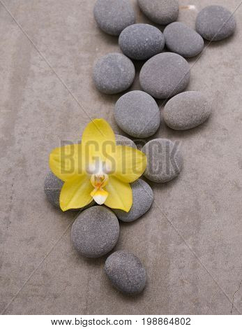 Yellow orchid with spa stones on grey background