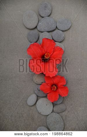 red Hibiscus flower and Pile of stone on grey background.