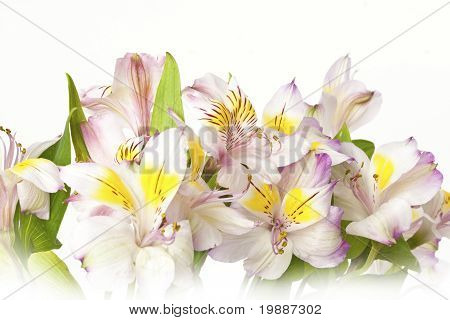 Bouquet Of Lilies Background