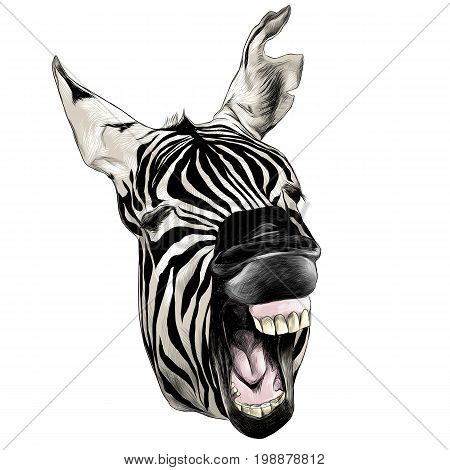Zebra head contorts face with open mouth smiling sketch vector graphics color picture