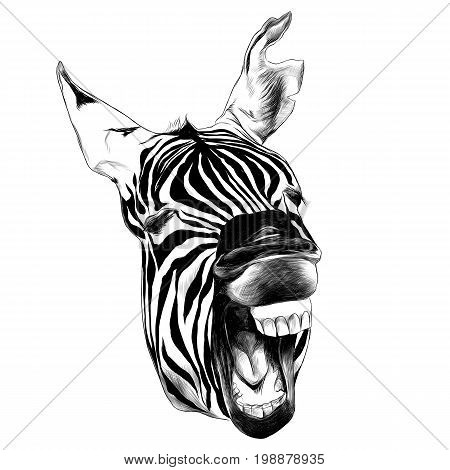 Zebra head contorts face with open mouth smiling sketch vector graphics black and white drawing