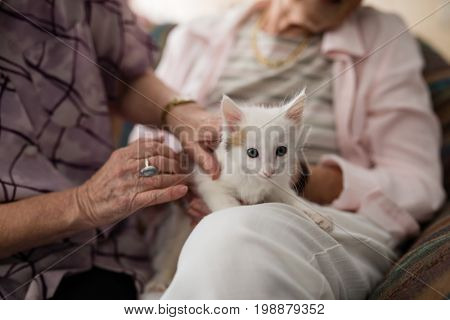 Midsection of senior females stroking kitten on armchair at retirement home