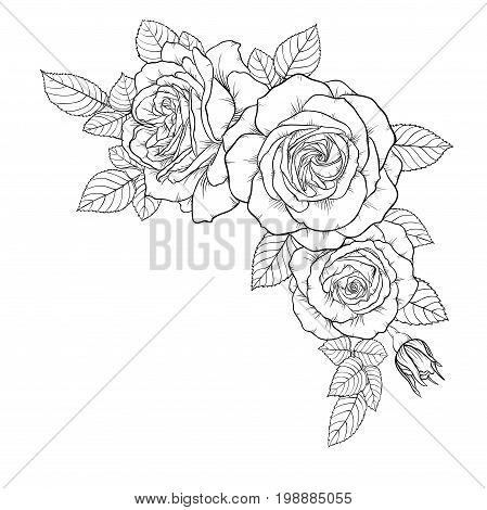 beautiful black and white bouquet rose and leaves. Floral arrangement isolated on background. design greeting card and invitation of the wedding birthday Valentine s Day mother s day holiday.