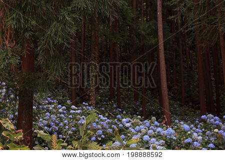 trees and flowers in a mystical setting