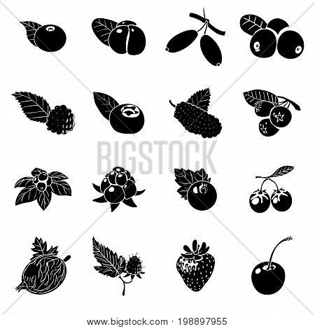 Berries icons set. Simple illustration of 16 berries vector icons for web