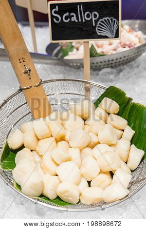 Fresh scallop seafood on ice