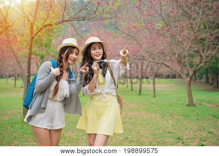 Young Female Backpackers Pointing Beautiful Sakura