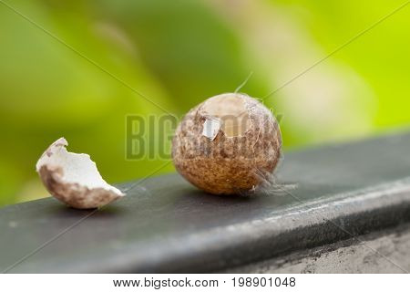 Bird eggs stolen from something. Came to the gate Natural background