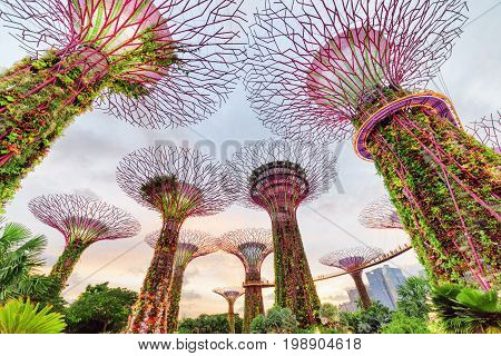 Wonderful Evening View Of The Supertree Grove With The Skyway