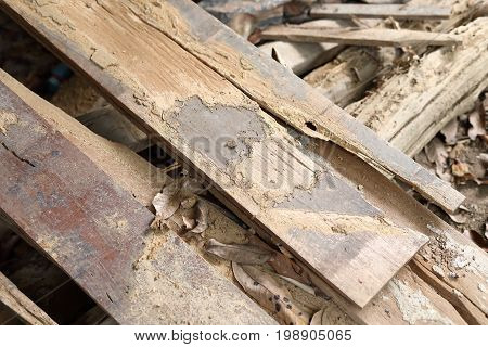 wood barn plank hollow damage from termite bugs