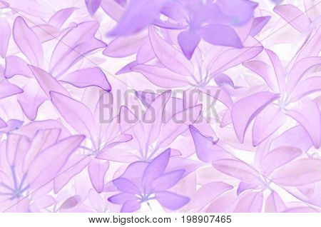 Abstract light purple leaves background, invert color