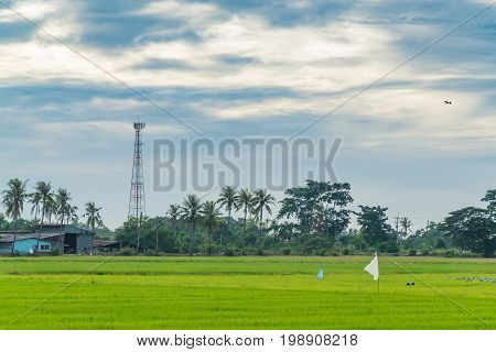 Telecommunication Tower With Rice Paddy Field.