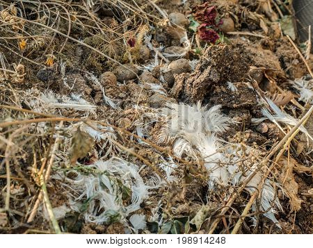 Garbage heap of dry grass, chicken feathers, rotten vegetables and old, dried flowers close-up. Rotting and decaying organic debris photographed with a soft focus.