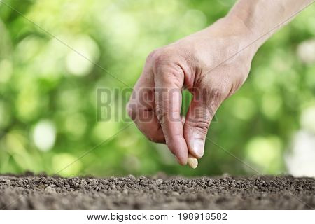 hand sowing seeds in the vegetable garden soil close up on green background